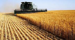 Firme de agricultura